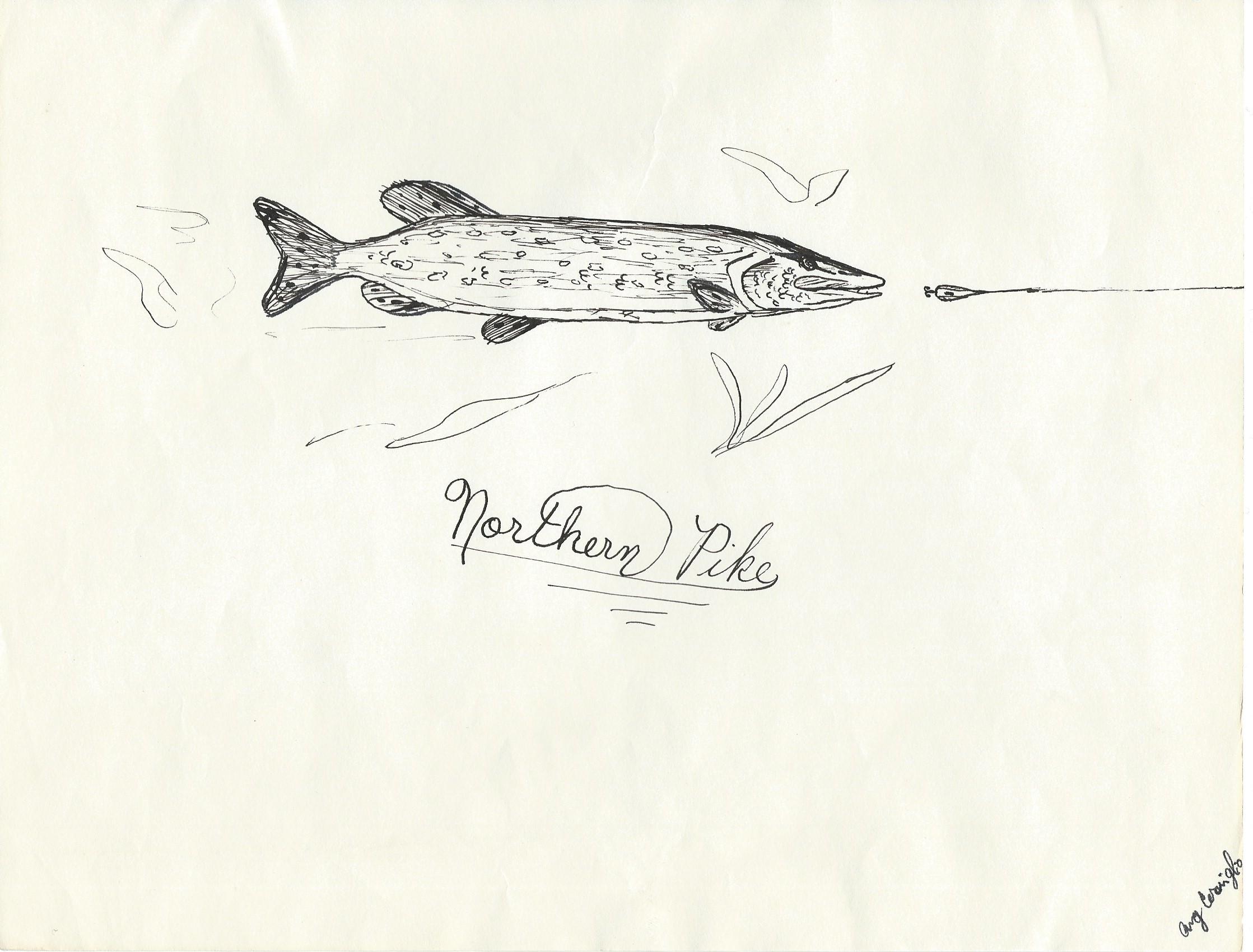 walleye sketch rtnl